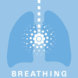 4 Pillars of Ergonomics: Breathing